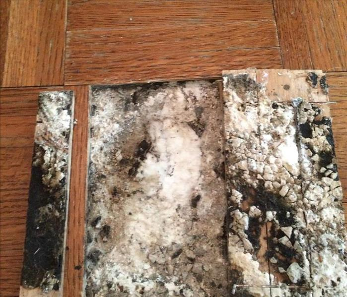 Unwanted Mold can cause issues at your home