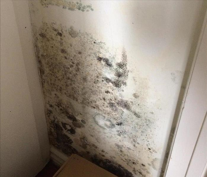 When you see mold, don't wait to deal with it!