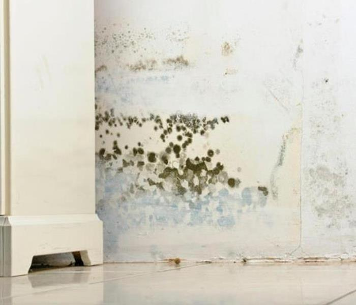 Mold Remediation When You See Mold