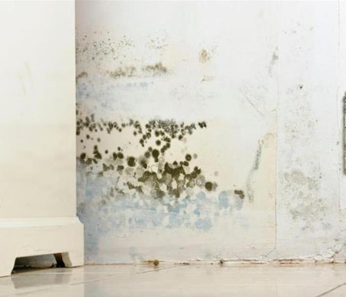 Mold Remediation What to do when you see mold